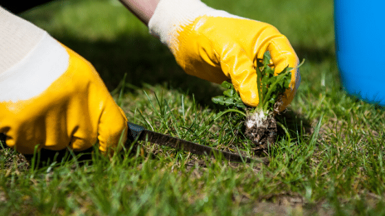 Lawn Care Tips for Early Spring
