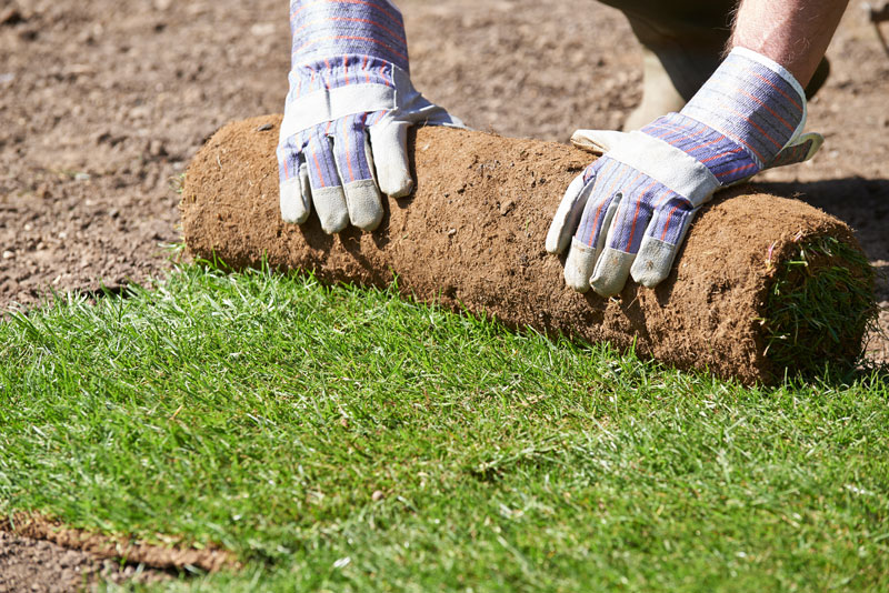Monarch SOD Utah Benefits To Sod Installation