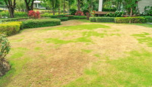 Have Brown Grass? Here's Why and What To Do?
