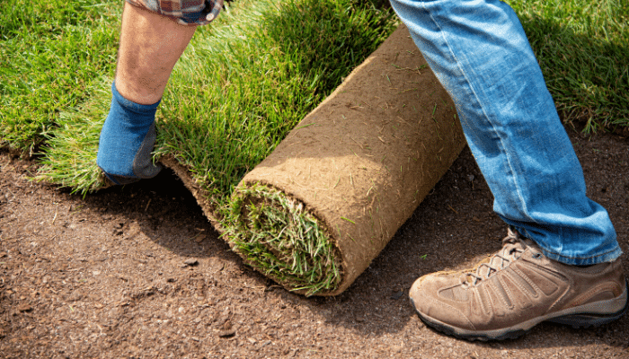 Maintenance Tips for New Sod