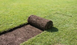 Best Sod for Clay Soil