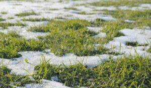 How Do I Water New Sod in Winter?