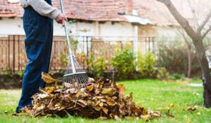Lawn Care Tips After Winter