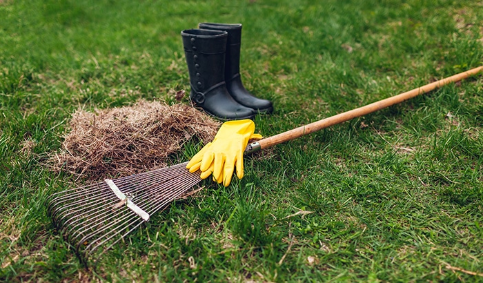 What to Do for Spring Lawn Care