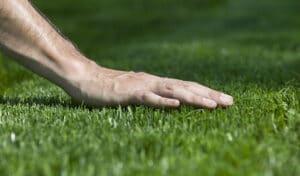 SOD Tips & Ideas: Top 5 Best Tips for Bermuda Grass
