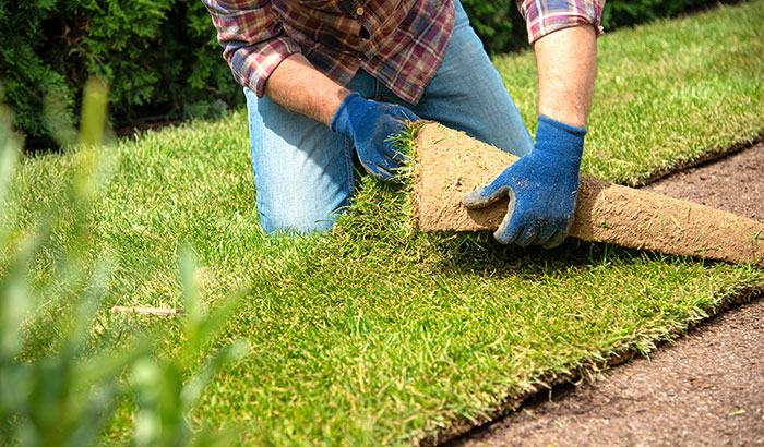 What are the Steps to Laying Sod?