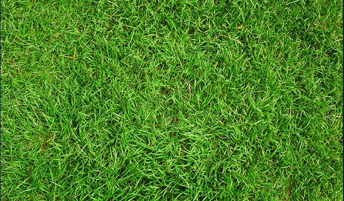 How to Keep Sod Healthy in Shaded Areas?