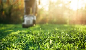 Top 3 Summer Lawn Care Tips in 2021